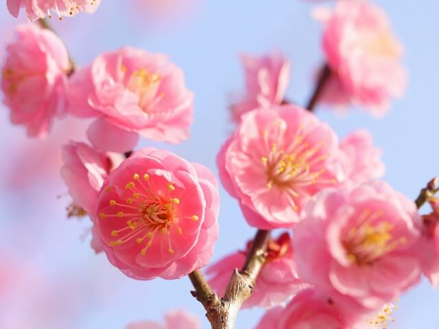Flowers Besides Cherry Blossoms