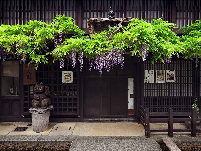 Hanging Wisteria Flowers | Takayama Old Town