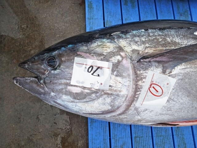 Tuna Sold for HOW MUCH?!