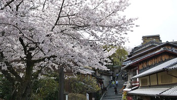 Essence of Spring | Hiroshima