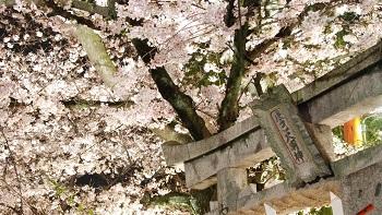 Essence of Spring | Hiroshima