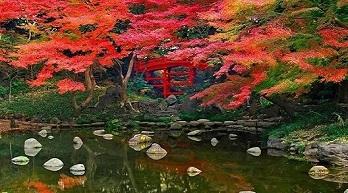 Fall Japan Tours