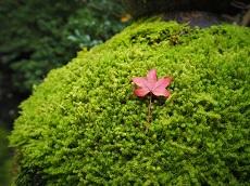 Moss Village & Wisdom Forest