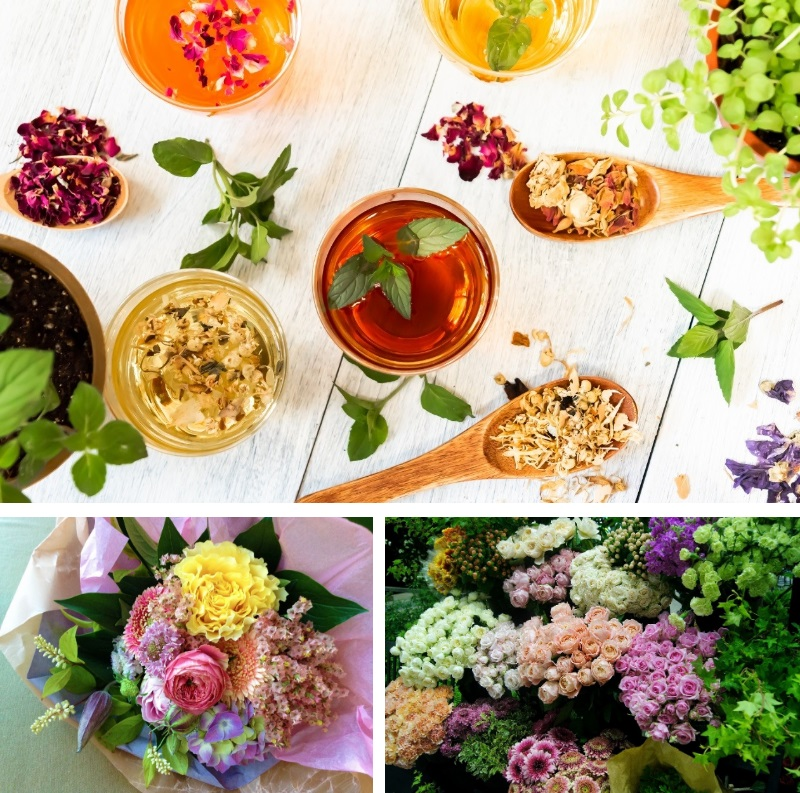 The Tea House of Flowers and Plants