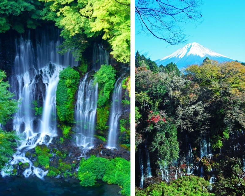 A Natural Treasure Amidst Mt. Fuji