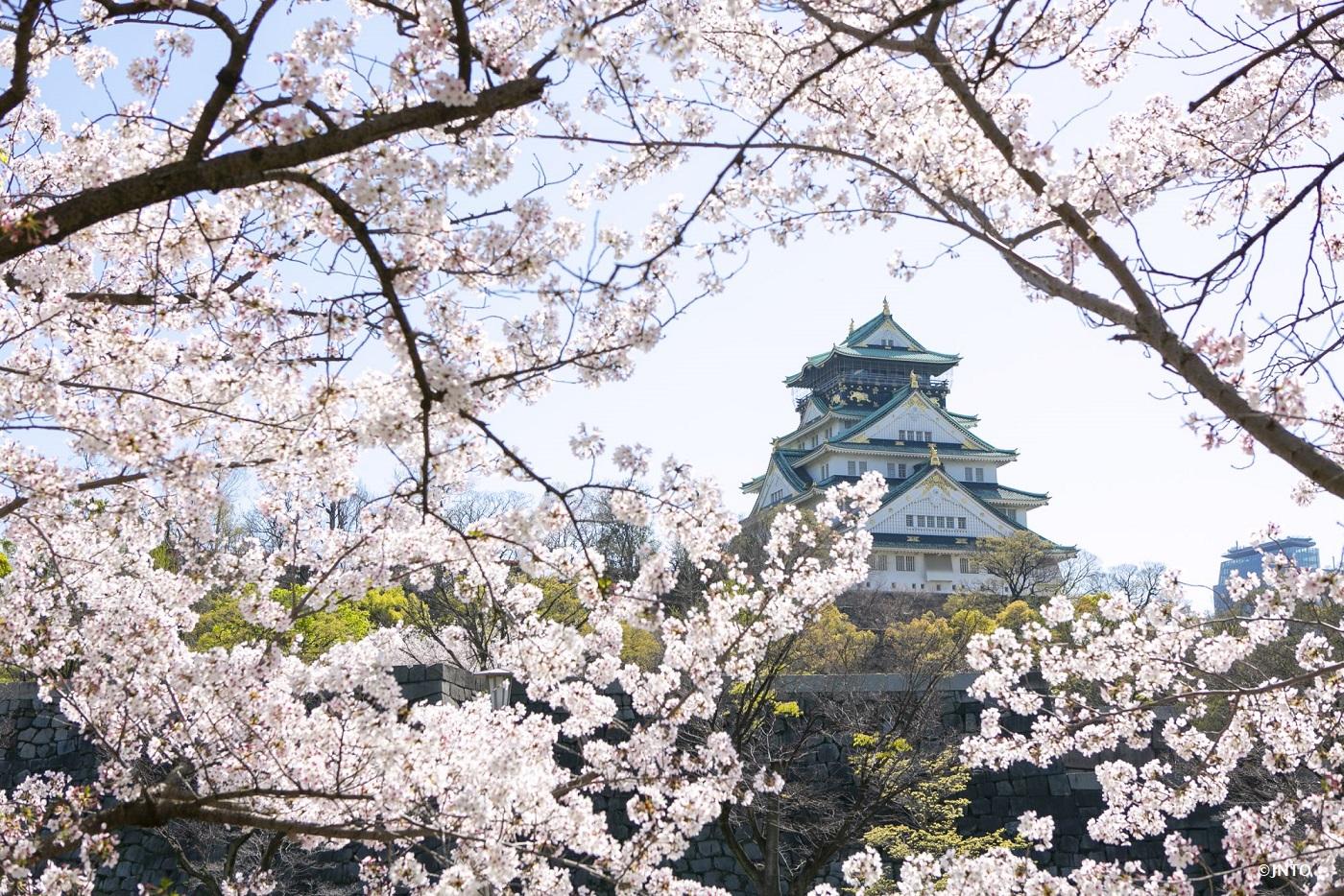 Perfect Spot for Cherry Blossom Tours & <em>Hanami</em>